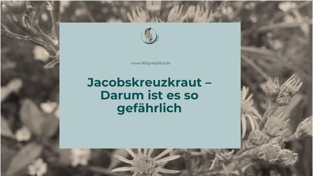 Alles über Jacobskreuzkraut