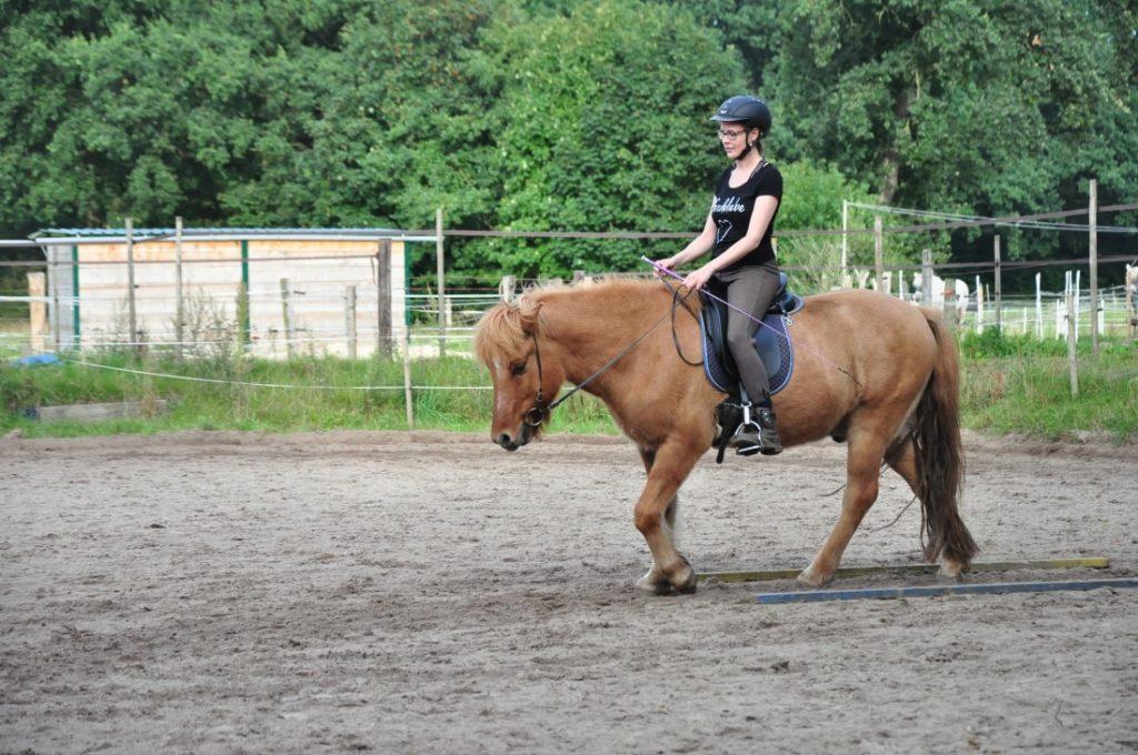 Bauchmuskeltraining stärkt den Pferderücken