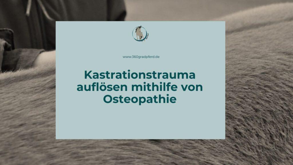 Kastrationstrauma lösen mit Pferdeosteopathie