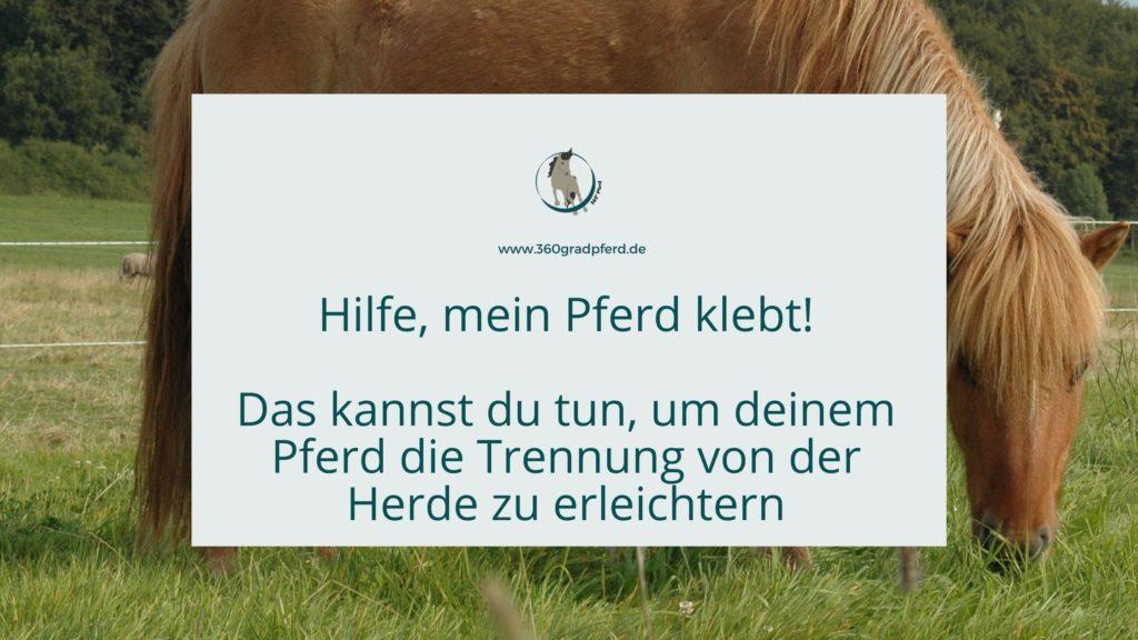 Pferd klebt - Das kannst du tun, um deinem Pferd die Trennung von der Herde zu erleichtern