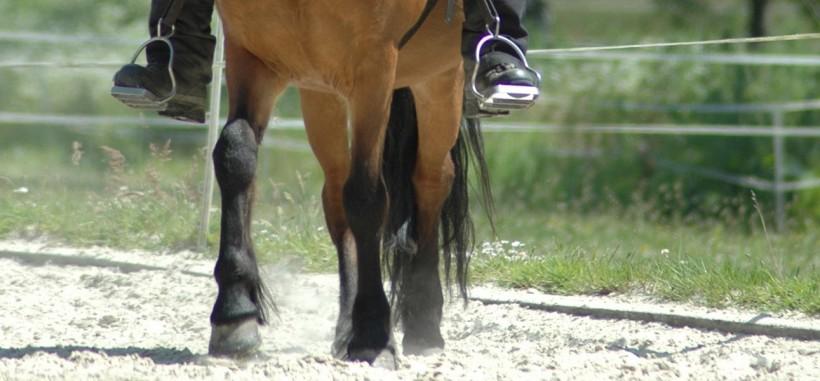 Seitengänge: Schulterherein reiten