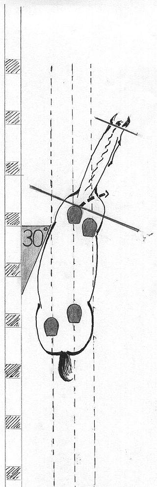 https://de.wikipedia.org/wiki/Schulterherein