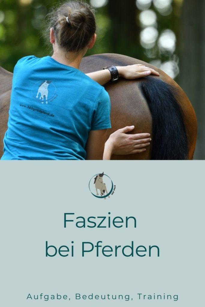 Faszien bei Pferden
