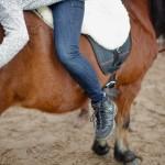 Pferde sind für viele Menschen ein verlässlicher Partner*