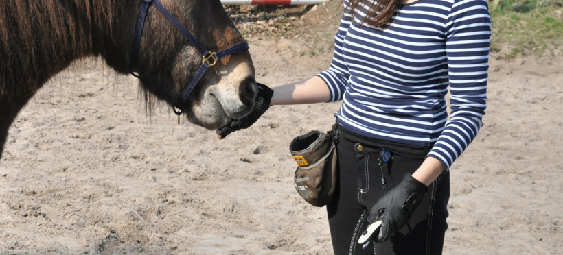 Clickertraining mit dem Pferd