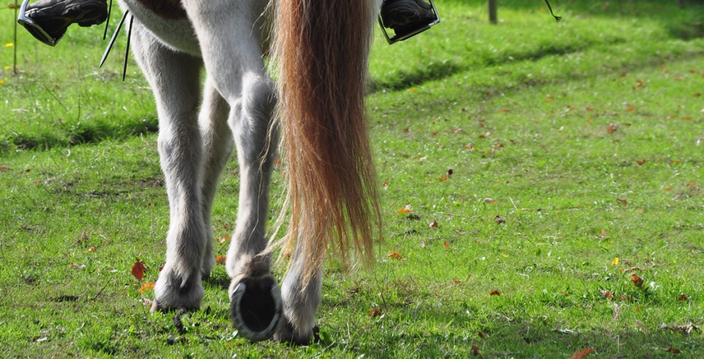 Kruppeherein reiten mit Pferd