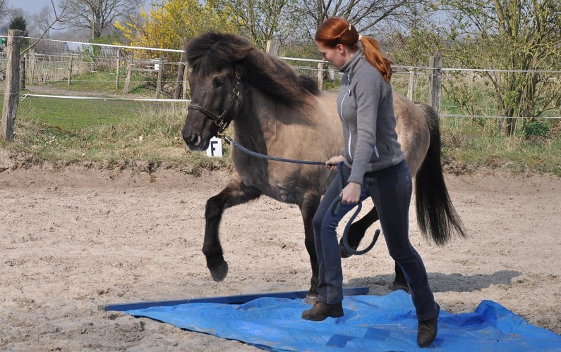 Pferd führen über Hindernis