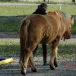 Ein Pferd richtig führen: Warum das gar nicht so einfach ist