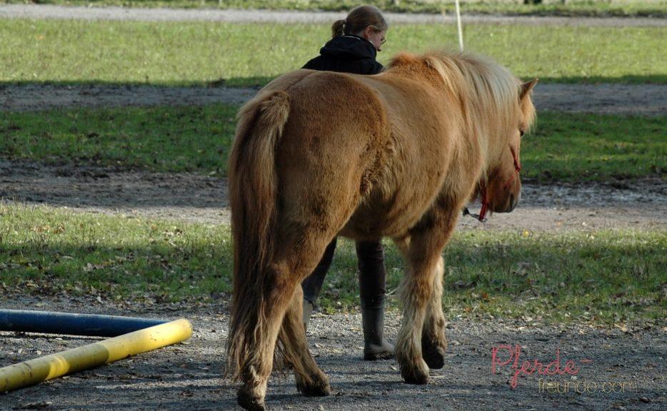 Ein Pferd führen