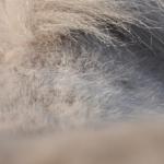 Pferderücken stärken durch Bauchmuskeltraining