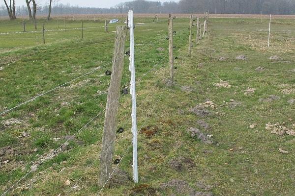 Weideposten aus Holz und Plastikpfosten