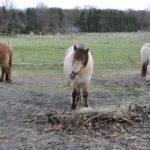 Fresspausen bei Pferden – ein wichtiges Thema während der Paddockzeit [Werbung]