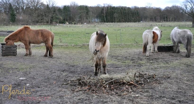 Regelmäßige Futterzeiten verringern zu lange Futterpausen bei Pferden