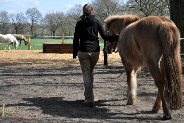 Wenn ich zentriert und im Gleichgewicht bin, kann ich meinem Pferd beim Führen viel mehr Vertrauen bieten