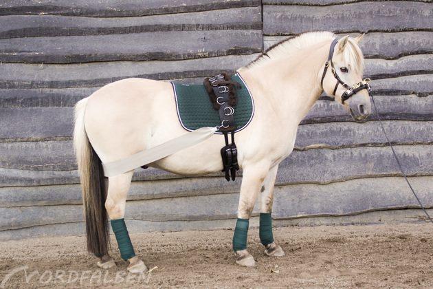 Pferdesachen verschönern