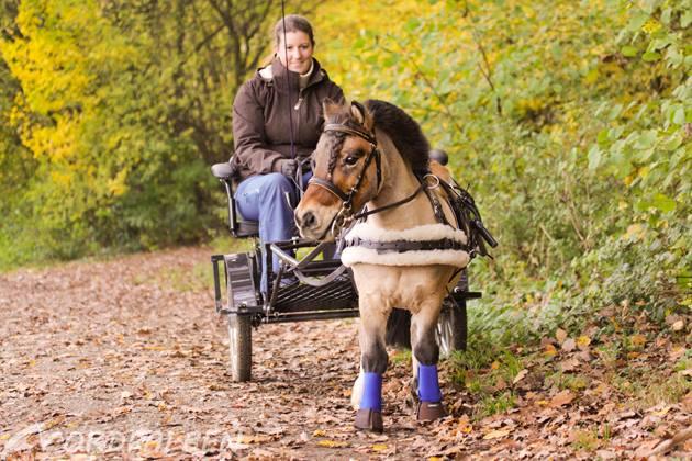 Lina und ihr Minishetty fahren Kutsche