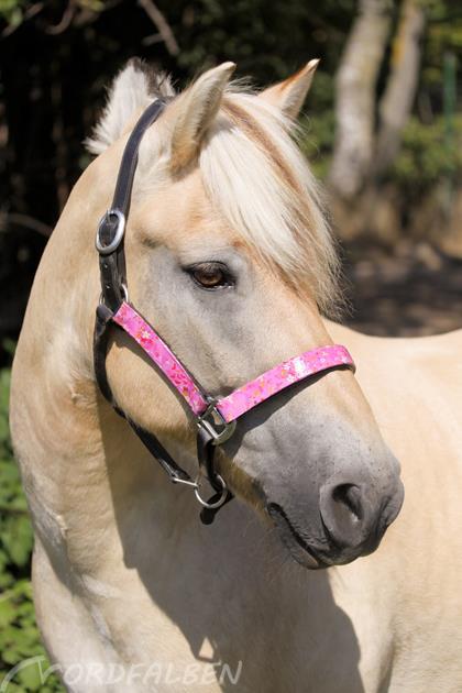 Pferdehalfter selbst gemacht