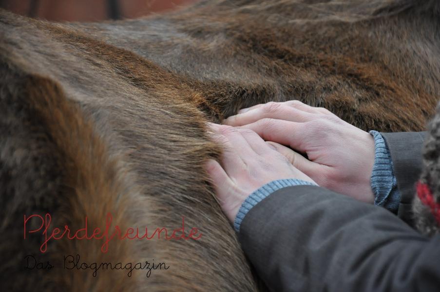 Pferd bei der osteopathischen Behandlung