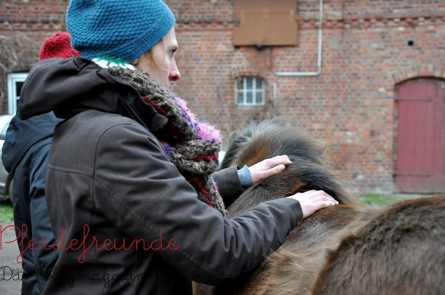 Osteopathische Behandlung beim Pferd