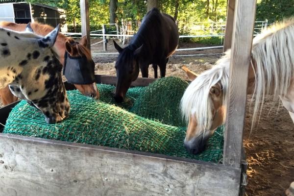 Pferde haben 24 Stunden Heu mit Heunetzen zur Verfügung