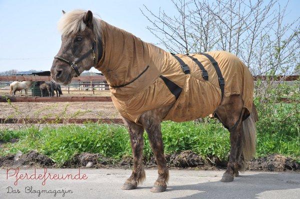 Pferd mit Sommerekzem und Ekzemderdecke
