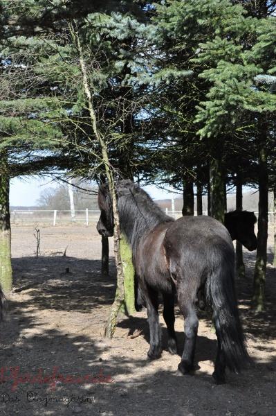 Pferd schubbert sich am Baum