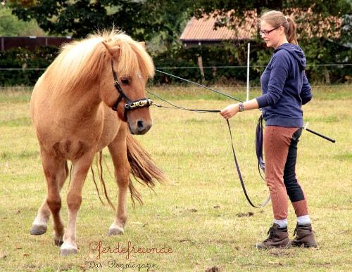 Hier kippt das Pferd im Hals ab, bricht mit der Hinterhand aus und rennt über seine äußere Schulter weg. Eine korrekte Biegung sieht anders aus!