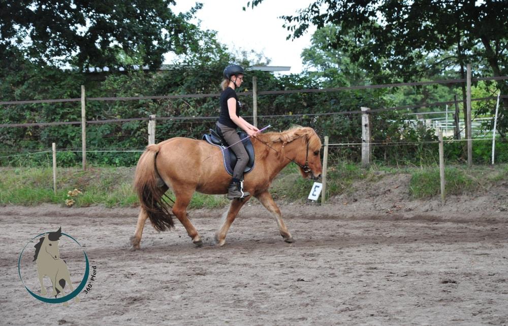 Stellung und Biegung beim Pferd