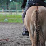 Fühlen und sehen: Über den Rücken reiten
