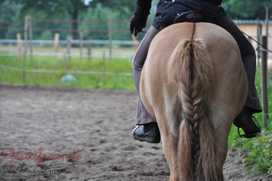 Pferd von hinten