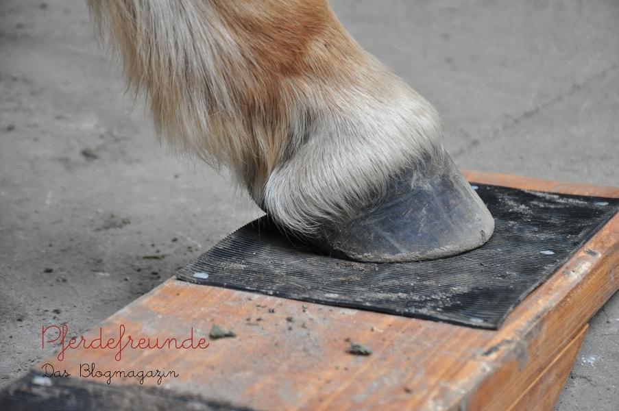 Pferdehuf auf Pferdewippe