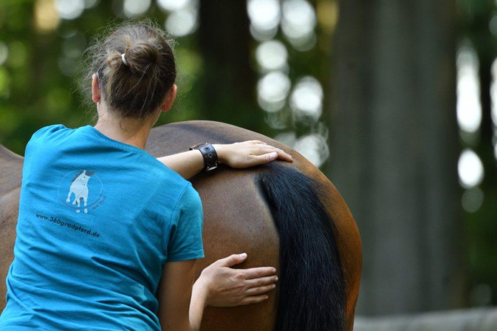 Abstreichen Pferd zum Erspüren von Verspannungen