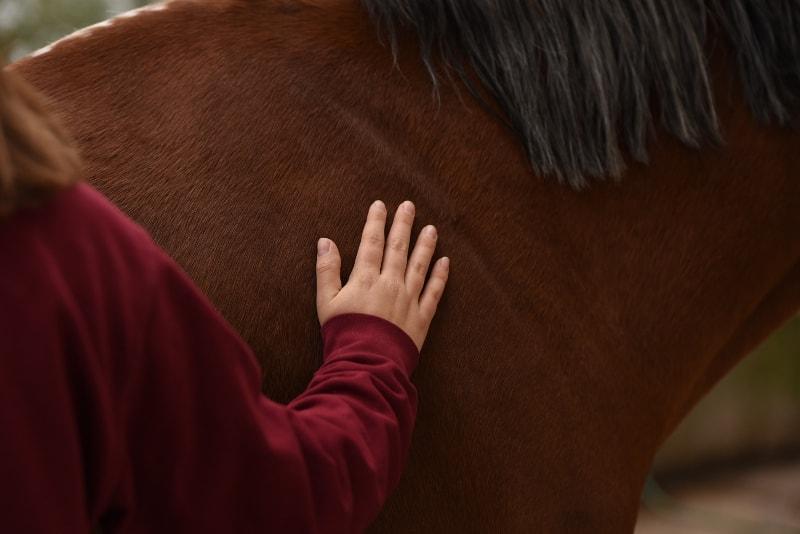TTouch: Durch das Abstreichen des Pferdekörpers können Verspannungen und Muskelverhärtungen erfühlt werden