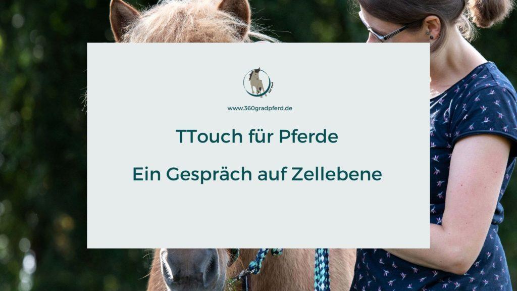 TTouch Pferd Was ist das