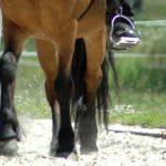 Seitengänge reiten – Tipp für mehr Abwechslung im Training