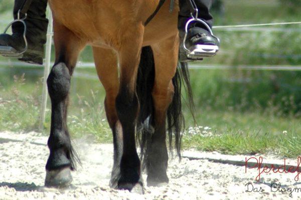 Seitengänge reiten - Schulterherein