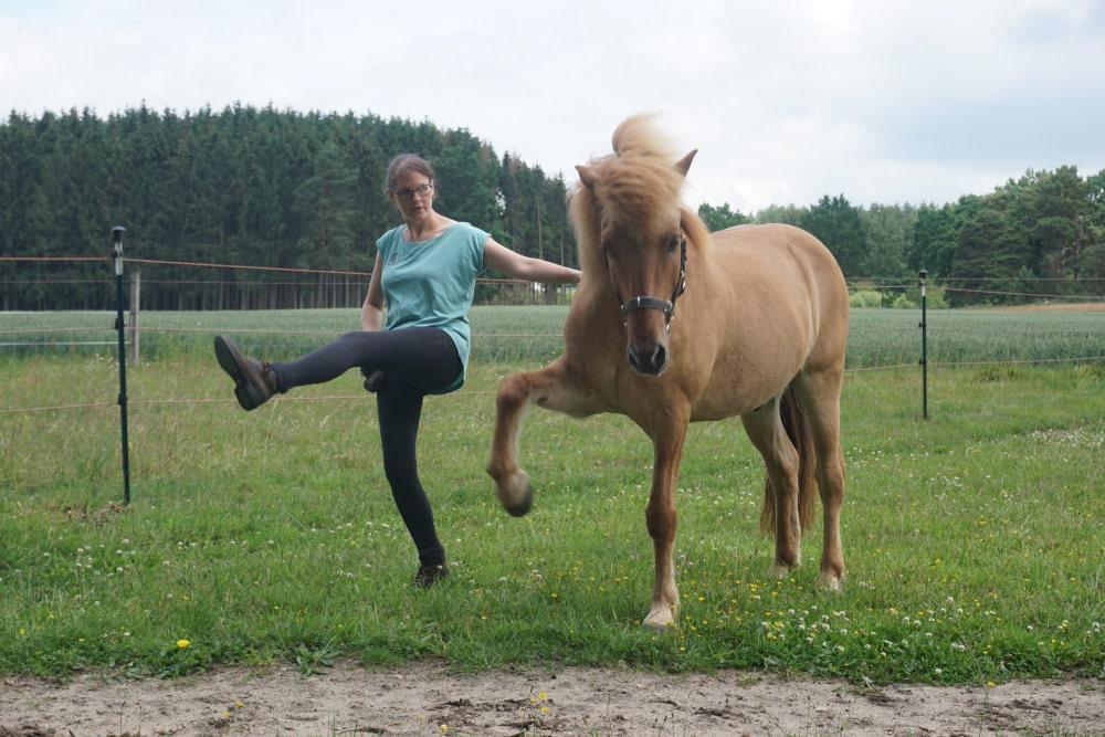 Spanischer Schritt mit Pferd