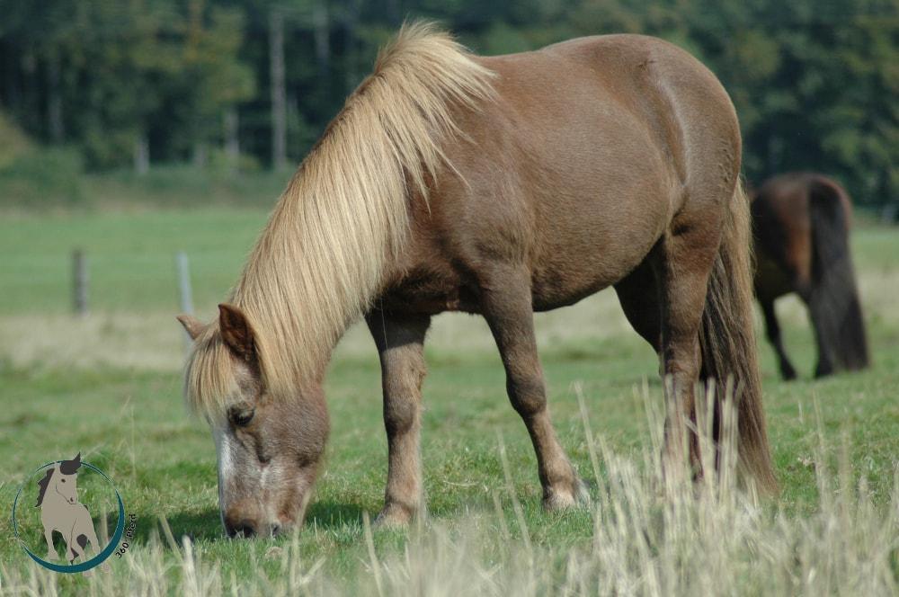 Artgerechte Pferdehaltung: Darauf solltest du bei der unterbringung deines Pferdes achten