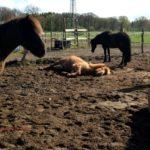Artgerechte Pferdehaltung oder der Traum vom perfekten Stall