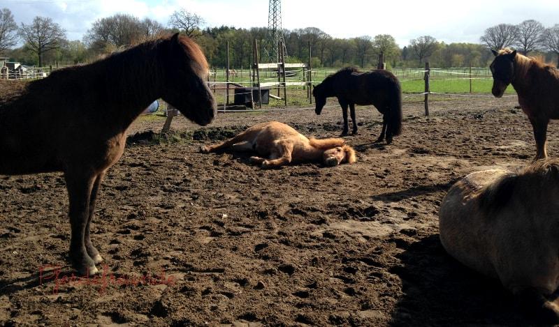 Eine entspannte Pferdeherde: so sieht artgerechte Pferdehaltung aus