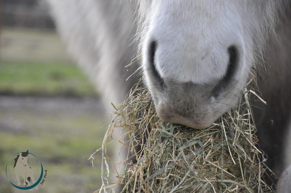Artgerechte Pferdefütterung ist wichtig für einen gut funktionierenden Stoffwechsel