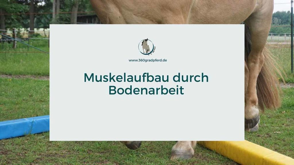 Muskelaufbau beim Pferd durch Bodenarbeit