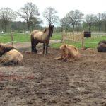 Ein neues Pferd in die Herde integrieren – so klappt's!
