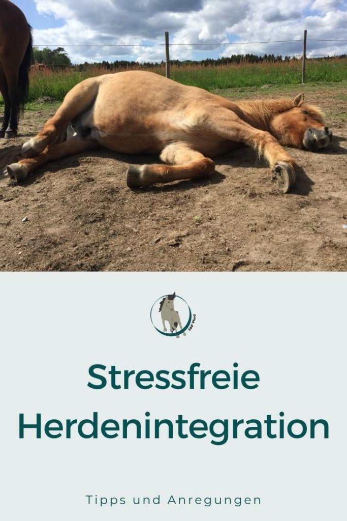 Stressfrei Pferd in Herde integrieren