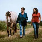 Pferdeverhalten verstehen – Diese 3 Grundbedürfnisse solltest du kennen