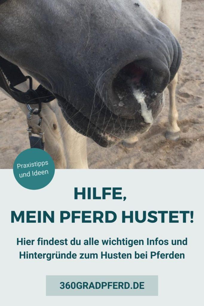 Alle wichtigen Infos zum Husten bei Pferden Vorbeugung und Behandlung