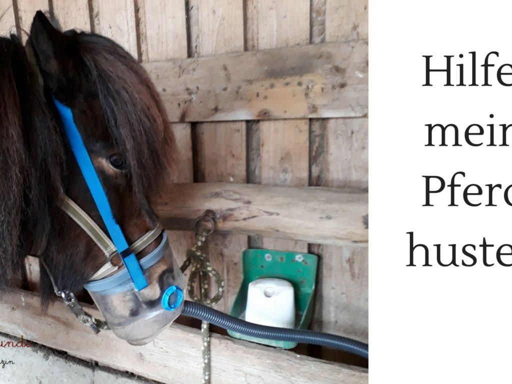 Inhalieren kann bei Pferdehusten helfen