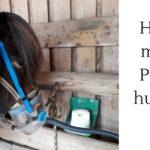 Hilfe, mein Pferd hustet! Infos zu Ursachen und Behandlung
