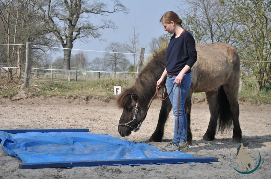 Bei der Ausbildung von Therapie- und auch Kinderpferden spielt Gelassenheit eine wichtige Rolle