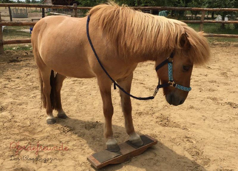 Pferd auf Pferdewippe